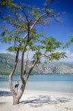 Opinião tropical da praia do branca de Areia perto de dili em Timor-Leste Fotos de Stock