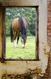 Opinião um cavalo que pasta Imagens de Stock Royalty Free