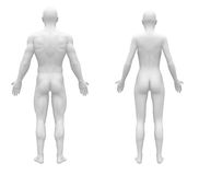 Opinião vazia fêmea masculina da parte traseira do branco ilustração stock