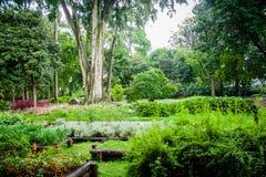 Opinião verde do jardim com árvores, flores e frutos Foto de Stock