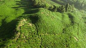Opinião verde do reboque da paisagem da plantação de chá em Cameron Highlands imagem de stock