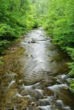 Opinião vertical Jennings Creek um córrego popular da truta Fotos de Stock