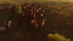 Opinión aérea caballos corrientes metrajes