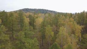 Opinión aérea de la cantidad del abejón: Vuelo sobre las montañas del otoño con los bosques, los prados y las colinas en luz suav almacen de metraje de vídeo