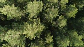 Opinión aérea de la naturaleza del bosque salvaje verde almacen de video