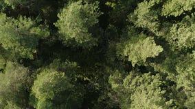 Opinión aérea de la naturaleza del bosque salvaje verde metrajes