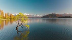 Opinión aérea del abejón del árbol solo del lago Wanaka, Nueva Zelanda metrajes