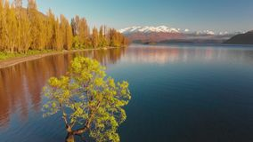 Opinión aérea del abejón del árbol solo del lago Wanaka, Nueva Zelanda almacen de metraje de vídeo
