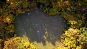 Opinión aérea del abejón 4k un ciclista que descansa en un césped del bosque