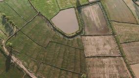 Opinión aérea del abejón que se mueve sobre un remiendo de los campos fangosos verdes y marrones del arroz en Asia en un plai sem almacen de video