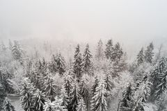 Opinión aérea del abejón sobre árboles nevosos durante el tiempo de niebla Imagen de archivo