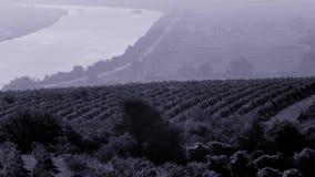 Opinión aérea del abejón sobre campos y el río Danubio agrícolas enormes almacen de metraje de vídeo