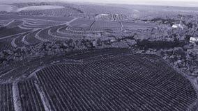 Opinión aérea del abejón sobre las colinas del viñedo