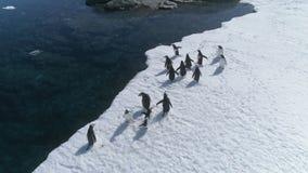 Opinión aérea del borde del pingüino del gentoo de la Antártida almacen de metraje de vídeo