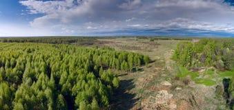 Opinión aérea del bosque joven del abedul Fotos de archivo libres de regalías