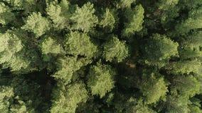 Opinión aérea del bosque salvaje verde hermoso del fondo metrajes