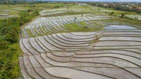 Opinión aérea del campo del arroz imagen de archivo
