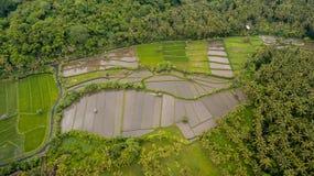 Opinión aérea del campo del arroz imagenes de archivo