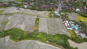Opinión aérea del campo del arroz fotografía de archivo