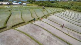Opinión aérea del campo del arroz Fotografía de archivo libre de regalías