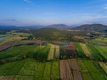 Opinión aérea del campo del arroz Foto de archivo libre de regalías