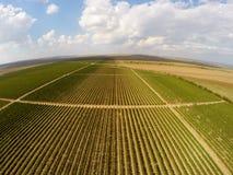 Opinión aérea del paisaje hermoso de los viñedos Fotos de archivo libres de regalías