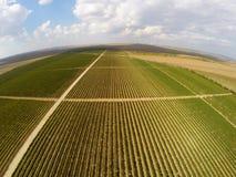 Opinión aérea del paisaje hermoso de los viñedos Foto de archivo