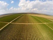 Opinión aérea del paisaje hermoso de los viñedos Imagenes de archivo
