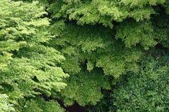 Opinión aérea del paisaje del panorama de árboles grandes Imagenes de archivo