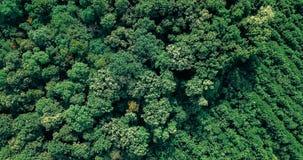 Opinión aérea del paso elevado del abejón del bosque verde grande Imágenes de archivo libres de regalías