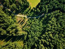 Opinión aérea del sol del verano del bosque caliente de la luz Imagen de archivo