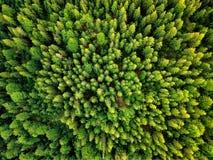 Opinión aérea del sol del verano del bosque caliente de la luz Imagenes de archivo