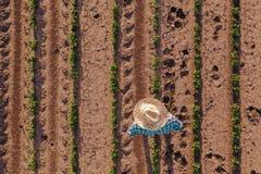 Opinión aérea el granjero en campo de la soja foto de archivo