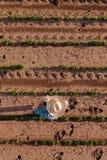 Opinión aérea el granjero en campo de la soja fotografía de archivo libre de regalías