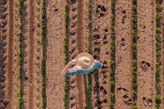 Opinión aérea el granjero en campo de la soja imagen de archivo
