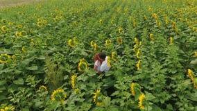Opinión aérea el hombre y la mujer que caminan en campo amarillo del girasol Concepto de la libertad Campo de los girasoles de la metrajes