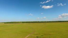 Opinión aérea el río, el bosque, campos, una manada de vacas y pastores cerca del pueblo de Chirichkasy, república del Chuvash metrajes