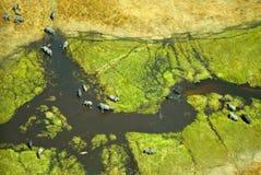 Opinión aérea elefantes en el delta de Okavango en Botswana imágenes de archivo libres de regalías