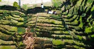 Opinión aérea Isla del Sol en el lago Titicaca en Bolivia almacen de video