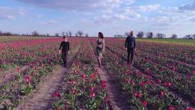 Opinión aérea la muchacha embarazada que camina con su marido e hijo en el campo de tulipanes en la floración en fondo del azul c metrajes