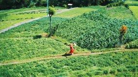 Opinión aérea la mujer en el vestido rojo que corre a lo largo de campos verdes en Bali almacen de metraje de vídeo