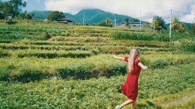 Opinión aérea la mujer en vestido rojo que camina a lo largo de campos verdes en Bali almacen de metraje de vídeo