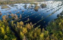 Opinión aérea sobre bosque y el lago Fotos de archivo libres de regalías