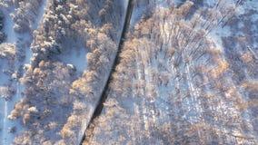Opinión aérea sobre el camino y el bosque en invierno metrajes