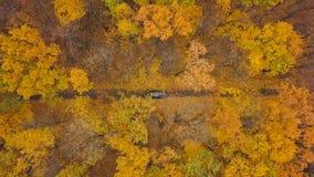 Opinión aérea sobre la conducción de automóviles a través del camino forestal del otoño Paisaje escénico del otoño almacen de video