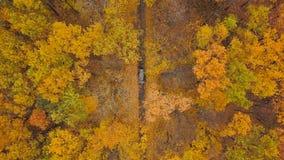 Opinión aérea sobre la conducción de automóviles a través del camino forestal del otoño Paisaje escénico del otoño metrajes