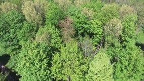 Opinión aérea sobre los tops del árbol almacen de video