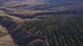 Opinión aérea sobre pico de montañas, la trayectoria natural, la montaña con los árboles y las plantas, vegetación, cielo con el  almacen de video