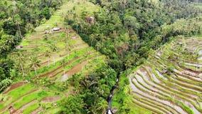 Opinión aérea sobre terrazas del arroz en Bali Cámara lenta 1920x1080, hd almacen de metraje de vídeo