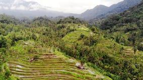 Opinión aérea sobre terrazas del arroz en Bali Cámara lenta 1920x1080 almacen de video
